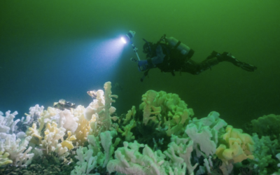 Glass Sponge Reef Protection in Howe Sound