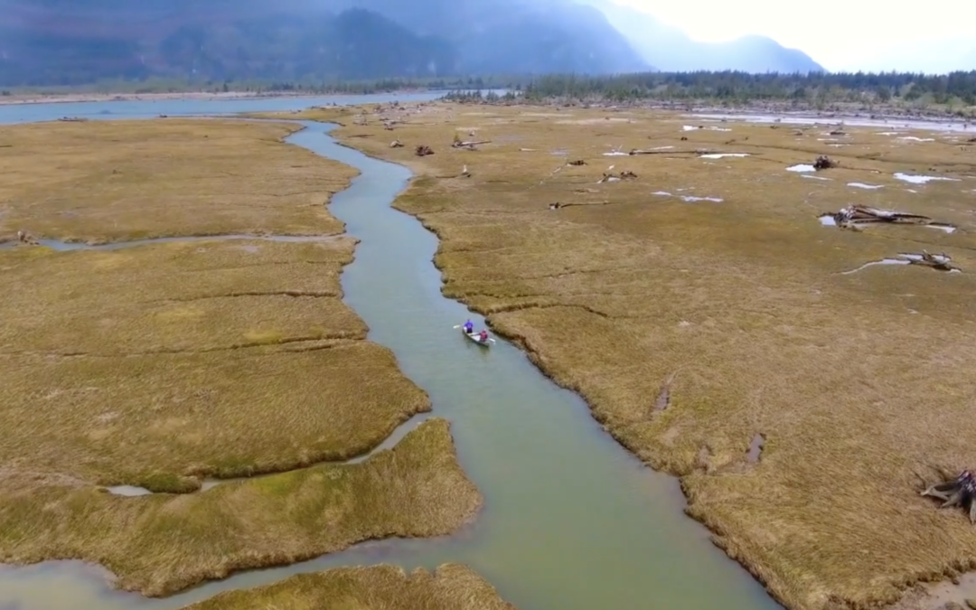 Squamish Estuary Clean Up