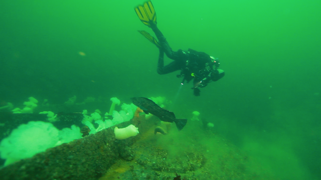 Distribution and Biomass of Plankton in Howe Sound/Átl'ḵa7tsem